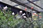 Neue Freiluftvoliere im Zoo Rostock eröffnet