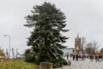 Weihnachtsbaum ohne Weihnachtsmarkt