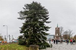 Traditioneller Weihnachtsbaum in Rostock aufgestellt