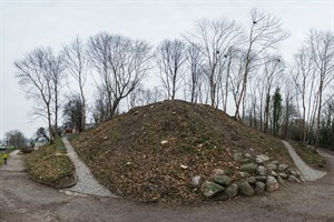 Fünf Bäume mit Nestern stehen an der Dreiwallbastion noch - die Hälfte der Saatkrähenkolonie-Brutstätten soll bei den Fällarbeiten beseitigt worden sein