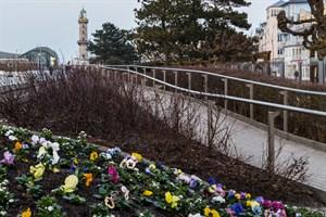 Frühjahrsbepflanzung in Warnemünde und der Innenstadt
