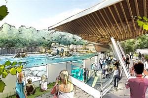 So soll die neue Robbenanlage im Zoo Rostock künftig ausschauen - Besuchereinblick (Grafik: Zooquariumdesign (ZQD) GmbH Hamburg)